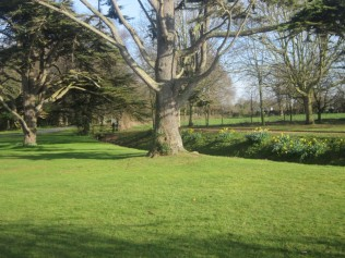 sunny-grounds